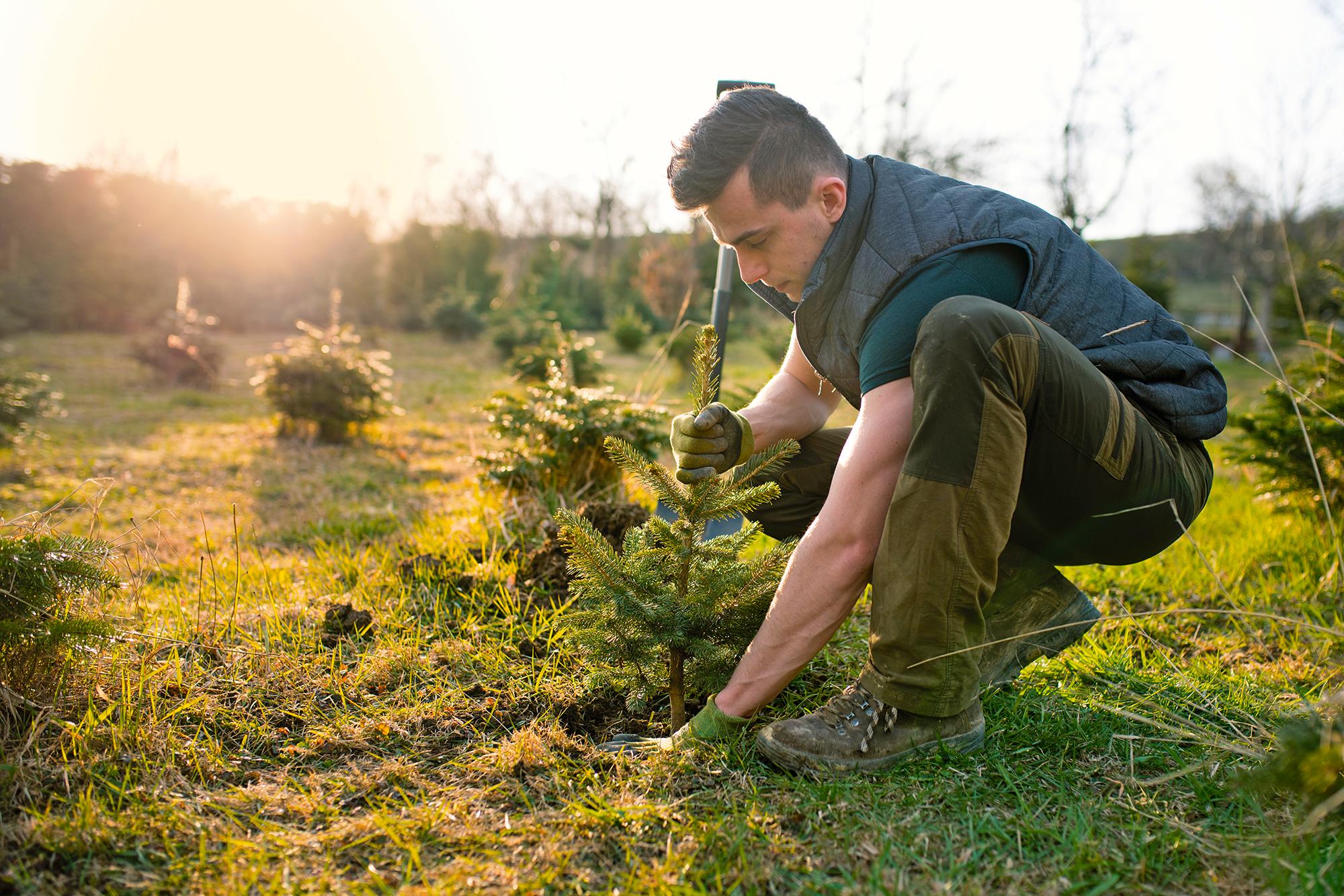 Mann beim Baum pflanzen